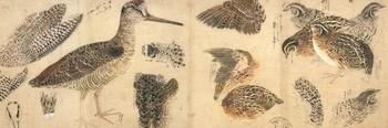 始興・鳥類真写.jpg
